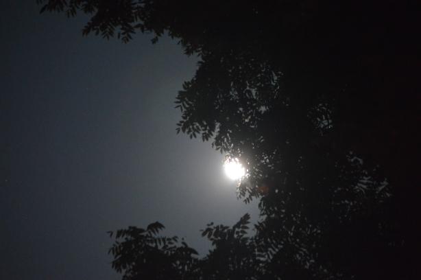 MSK Moon 1