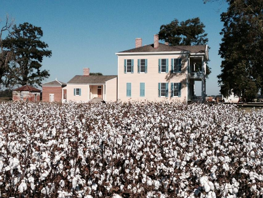 The Cotton Song